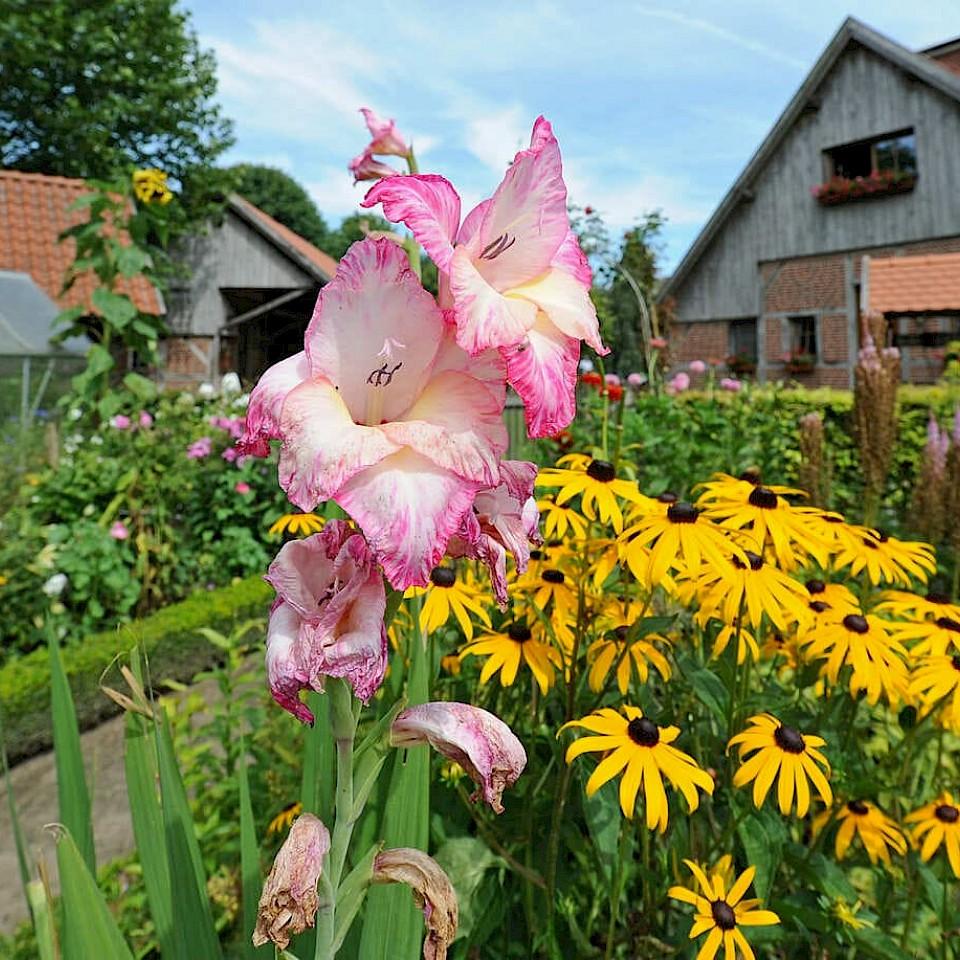 Flower dreams in Borken-Marbeck