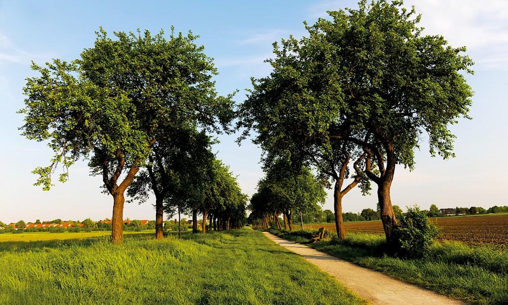 Landschaft Beckum
