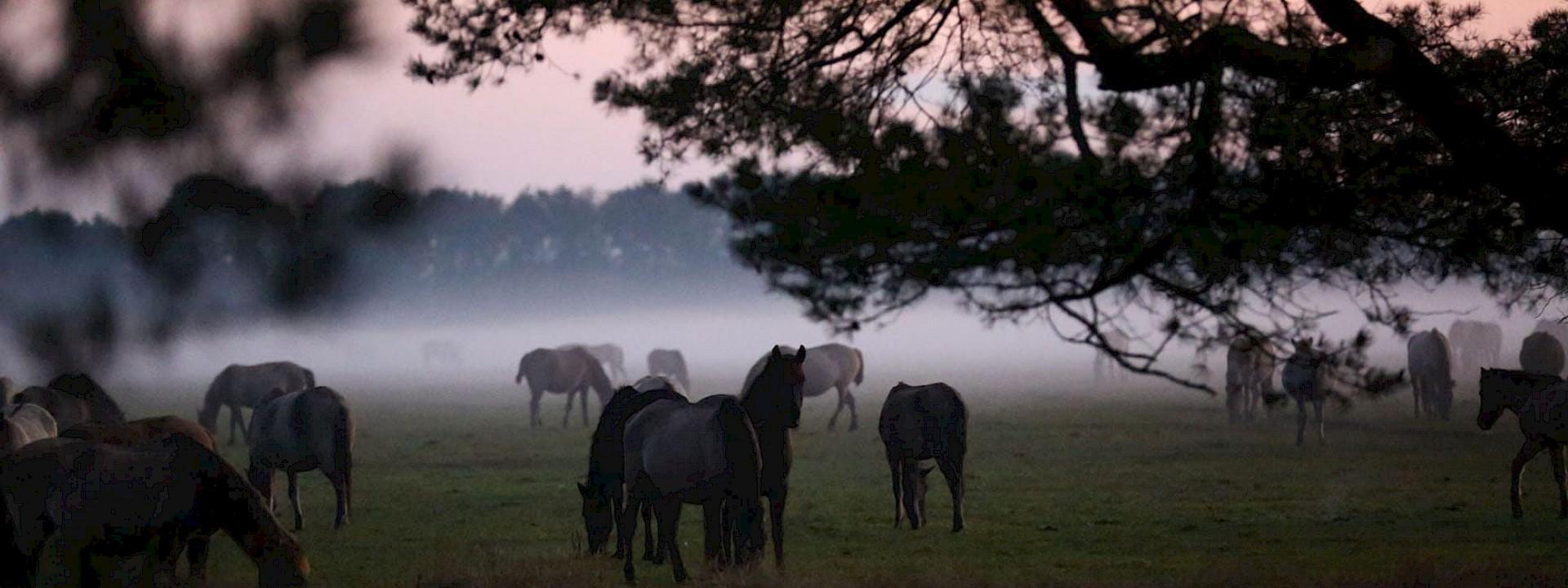 Wir zeigen Ihnen die Schönheit der Pferderegion Münsterland
