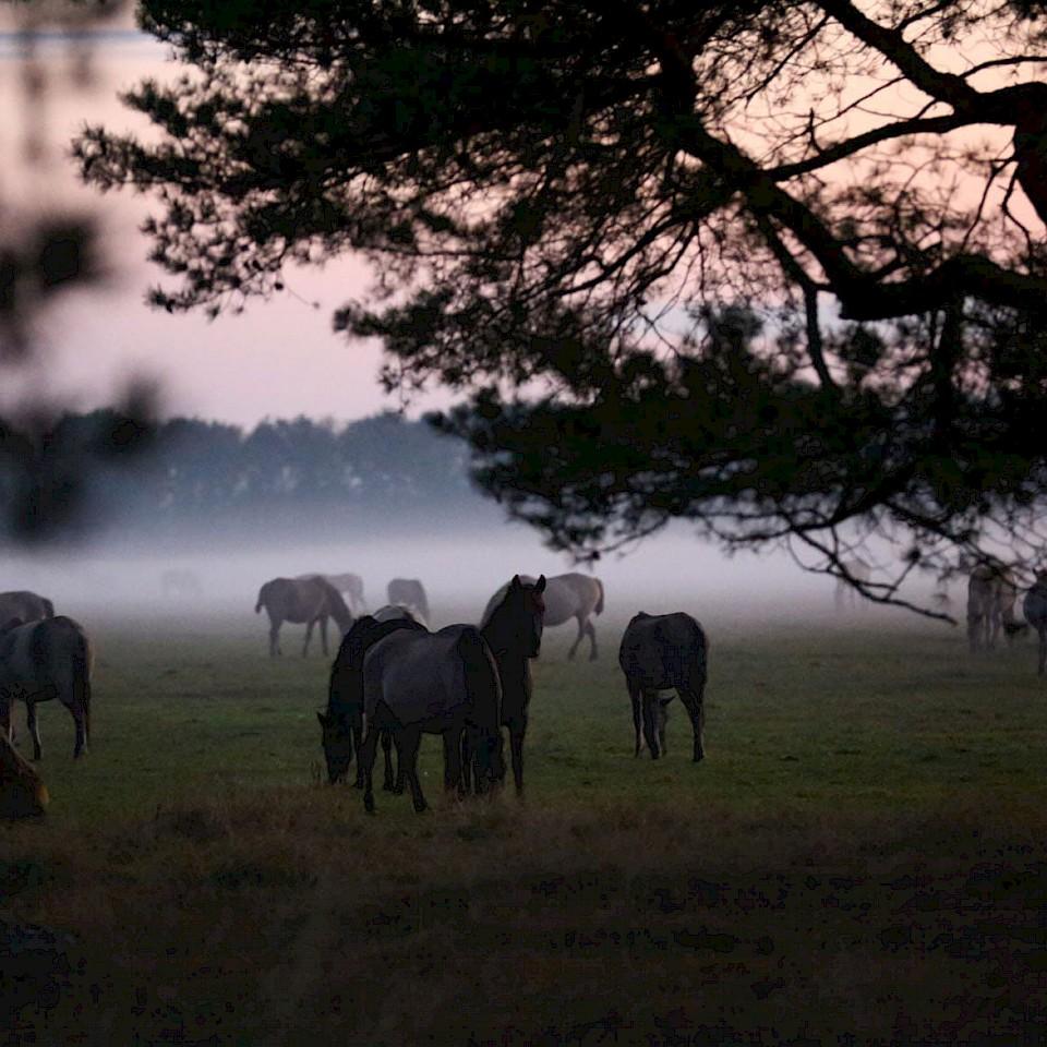Horse Region Münsterland