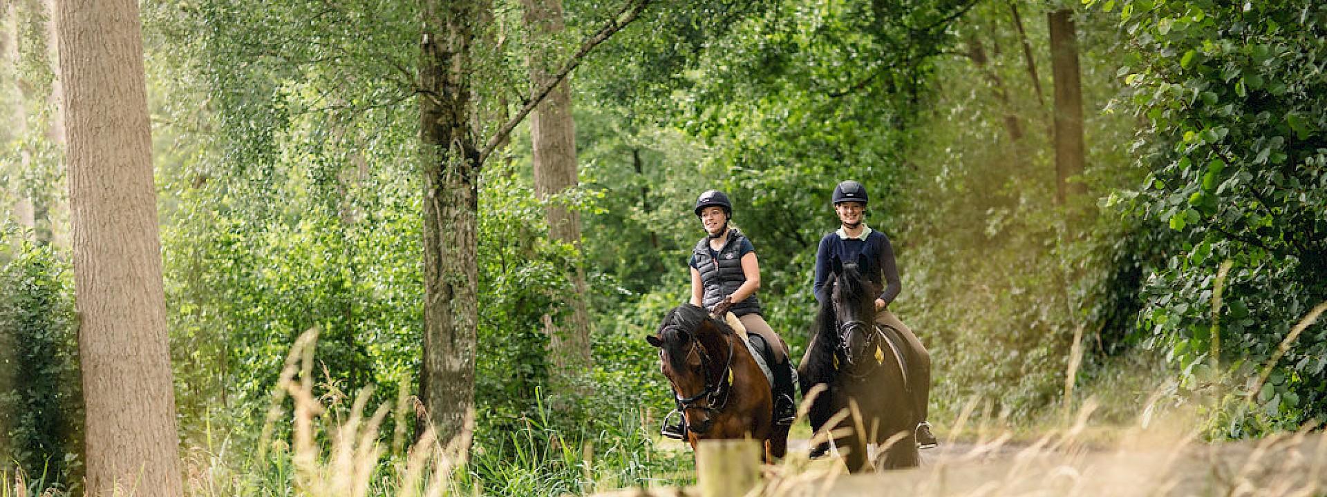 Die Region hautnah erleben Reitrouten im Münsterland
