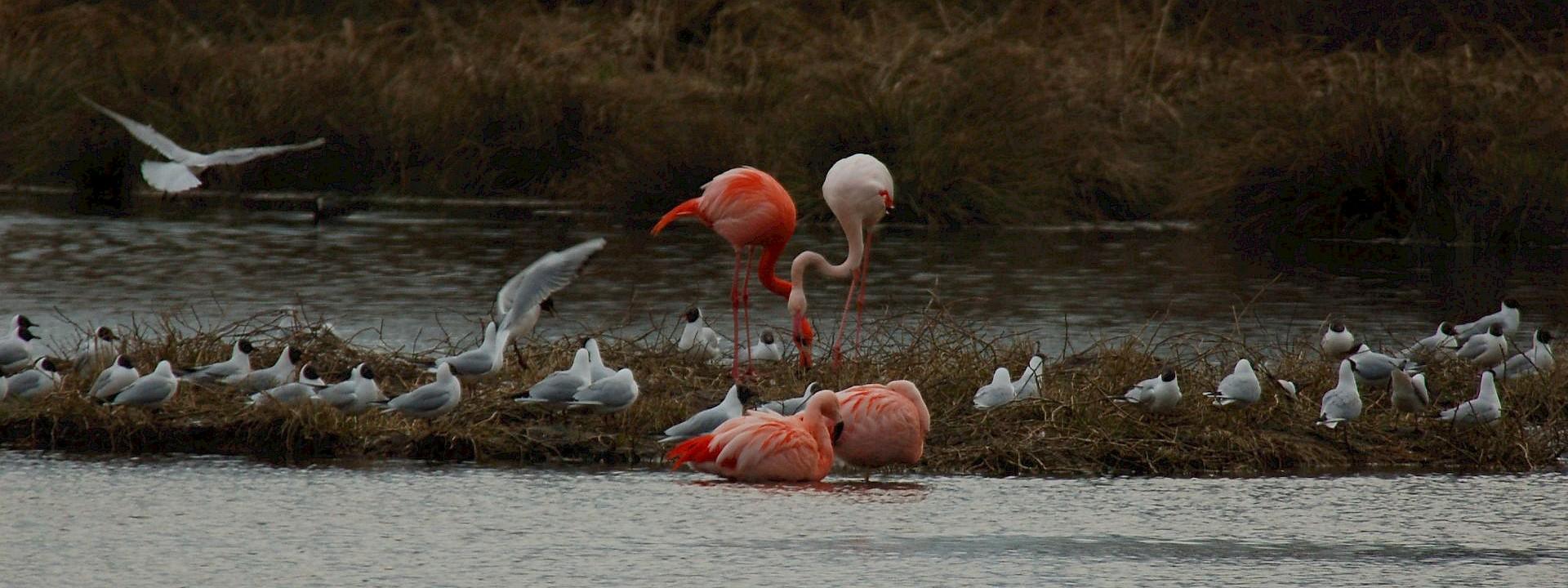 Zu den Schätzen der Natur Flamingoroute