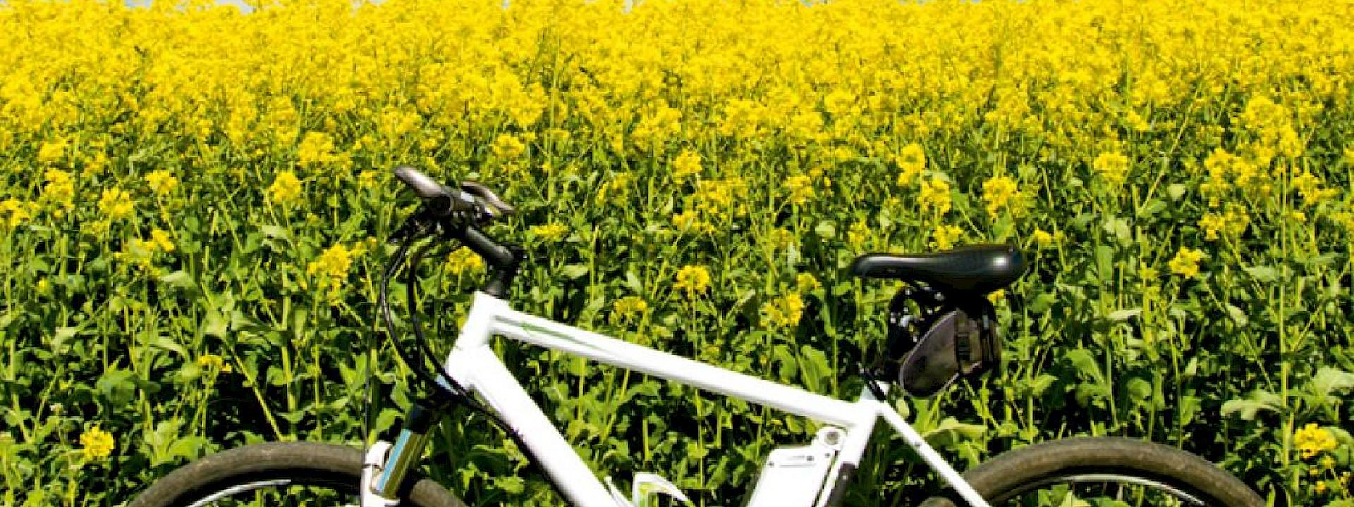 Münsterland ist Klimaland Projekte