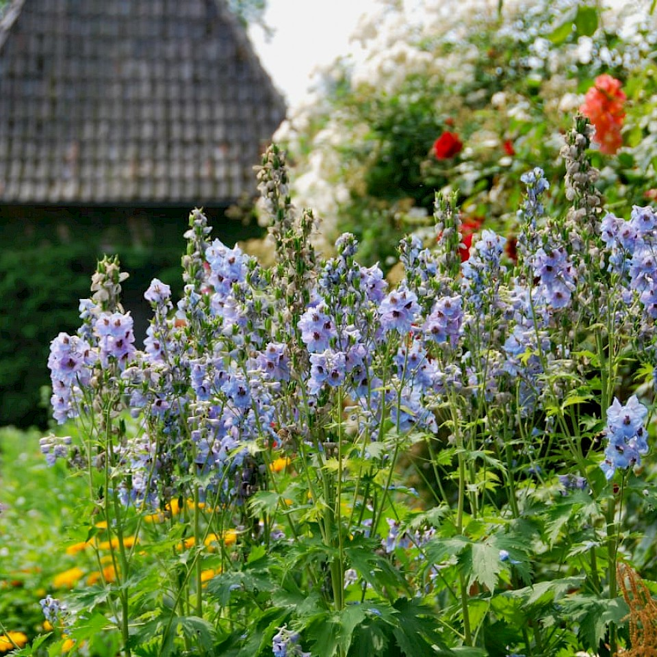 Garten am Haus Welbergen in Ochtrup