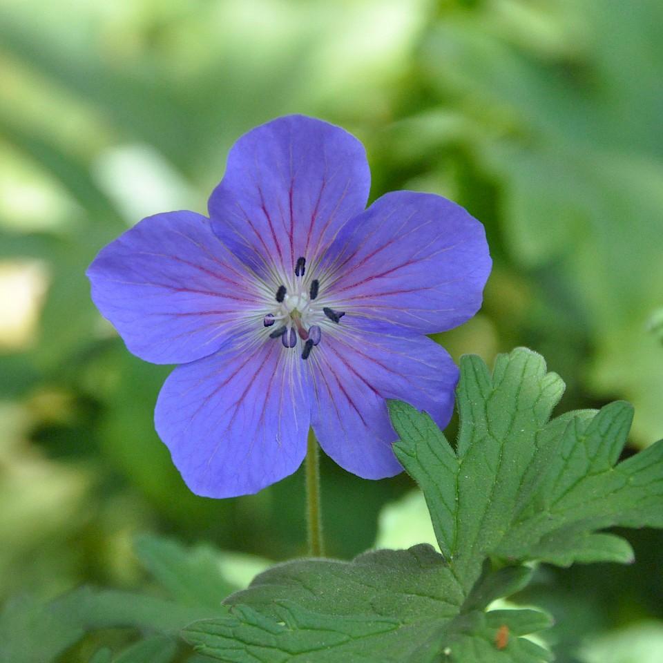 Blume im Münsterland