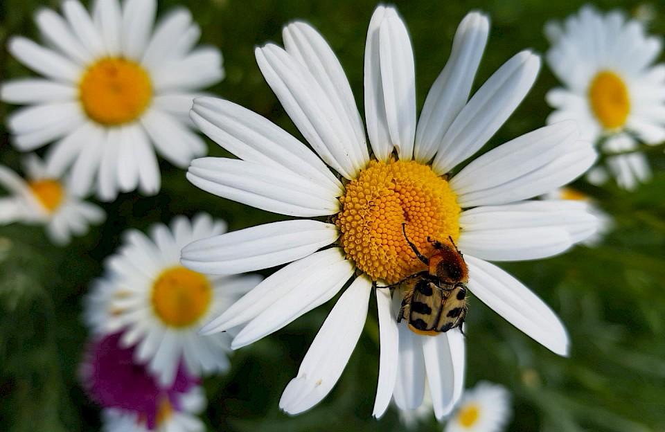 Eine vielfältige Auswahl an Blumen und Pflanzen lockt ganz verschiedene Tiere in den eigenen Garten.