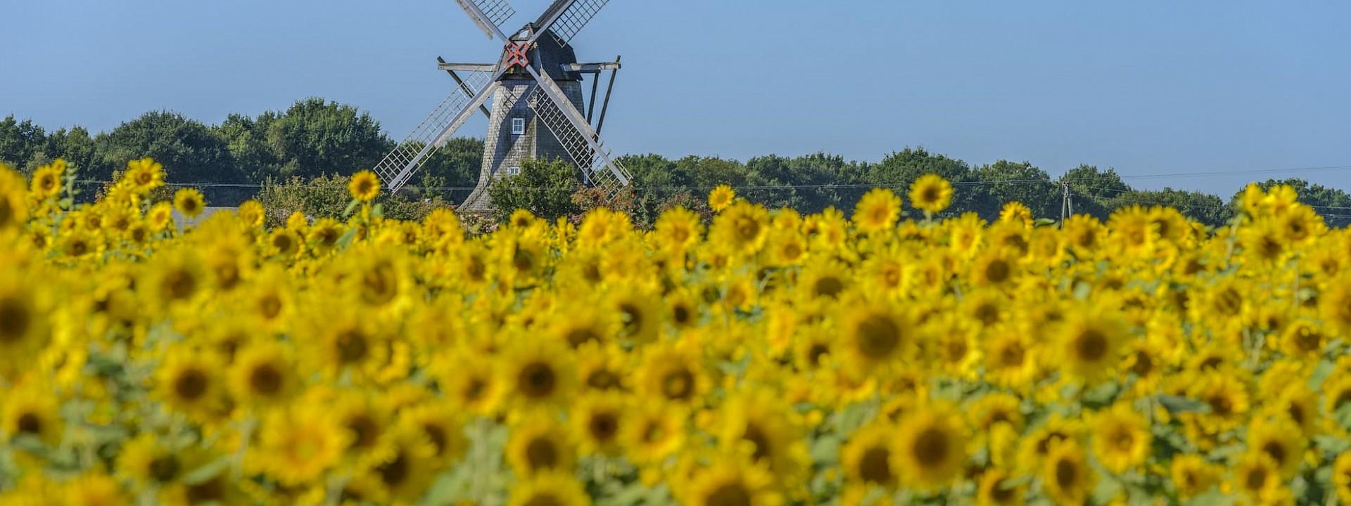 Das charmante Dorf im Münsterland Saerbeck
