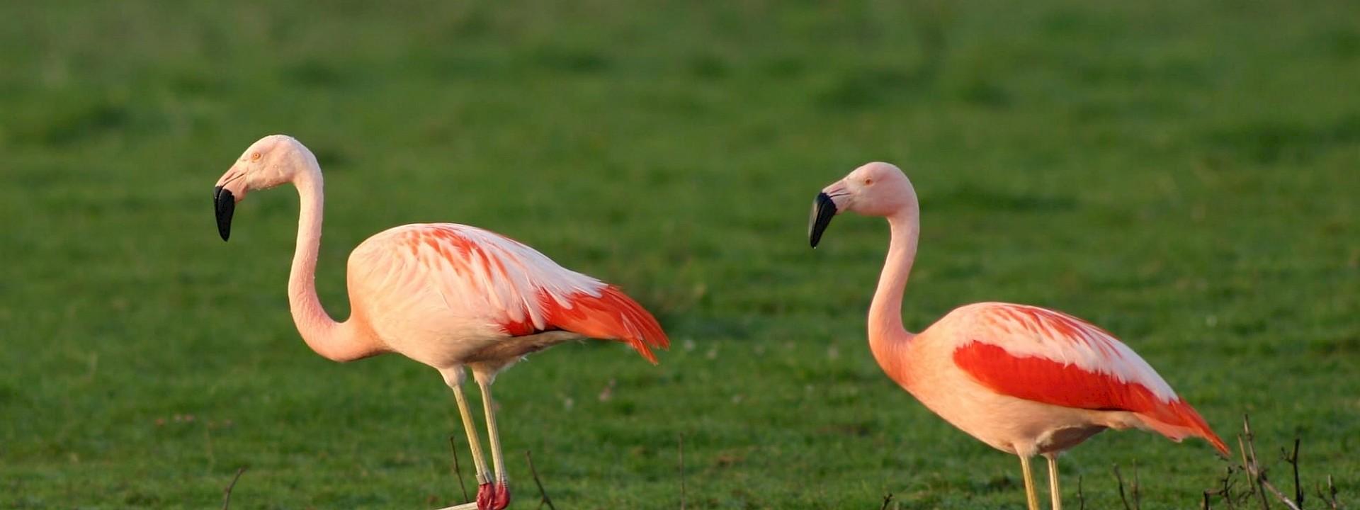 Kult und Pink Vreden