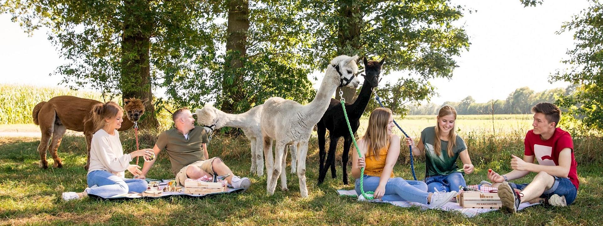 Entfliehe dem Alltagsstress Alpaka-Picknick in Gronau