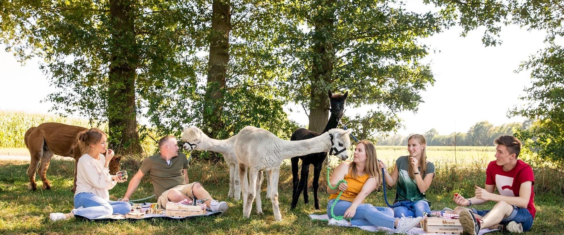 Alpaka-Wanderung mit Picknick