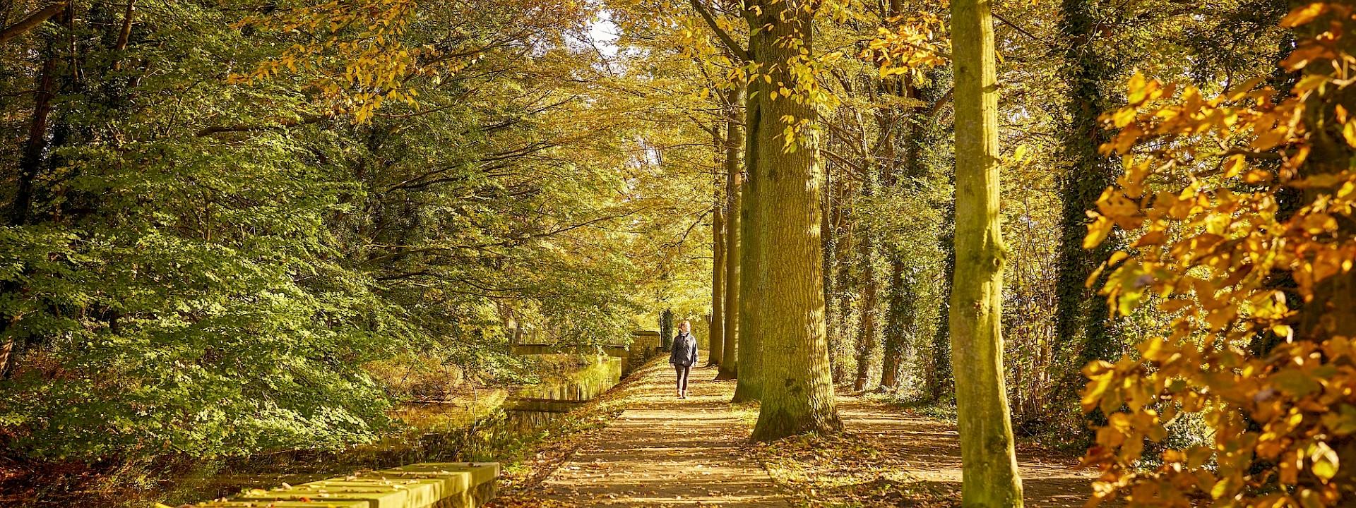 Herbstleuchten im... Münsterland