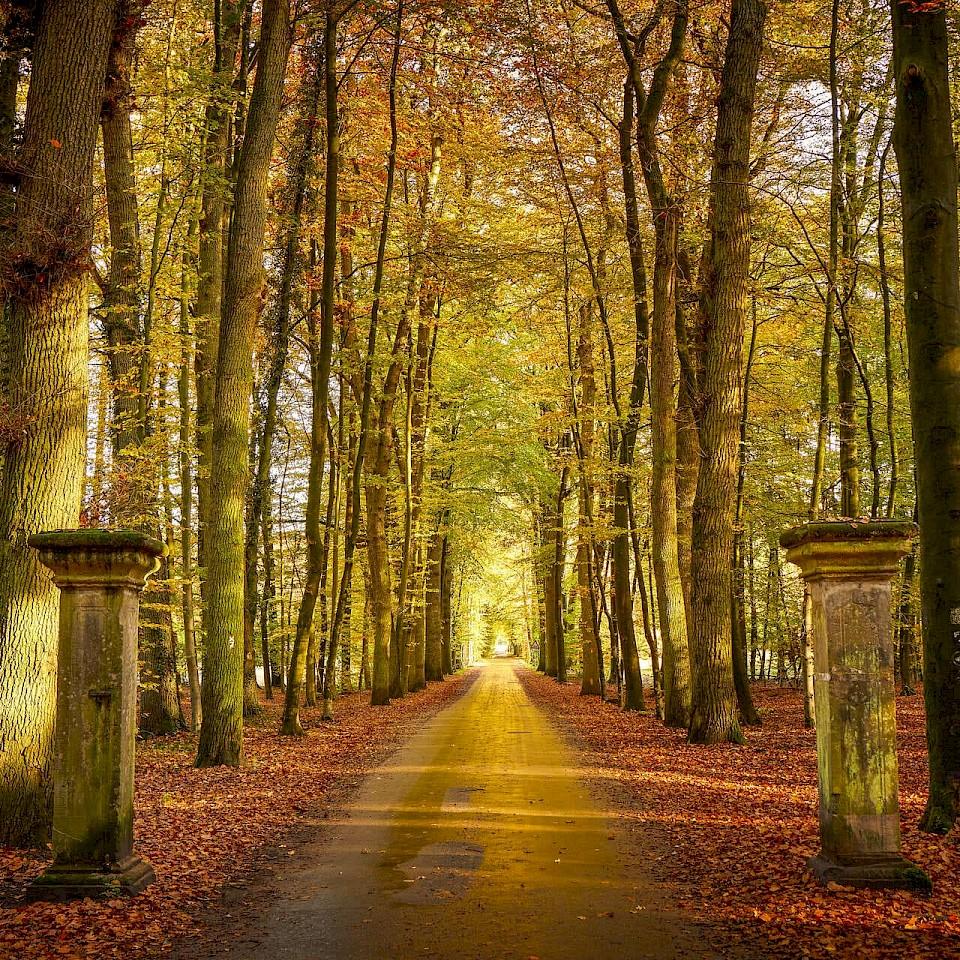 Autumn in the Münsterland