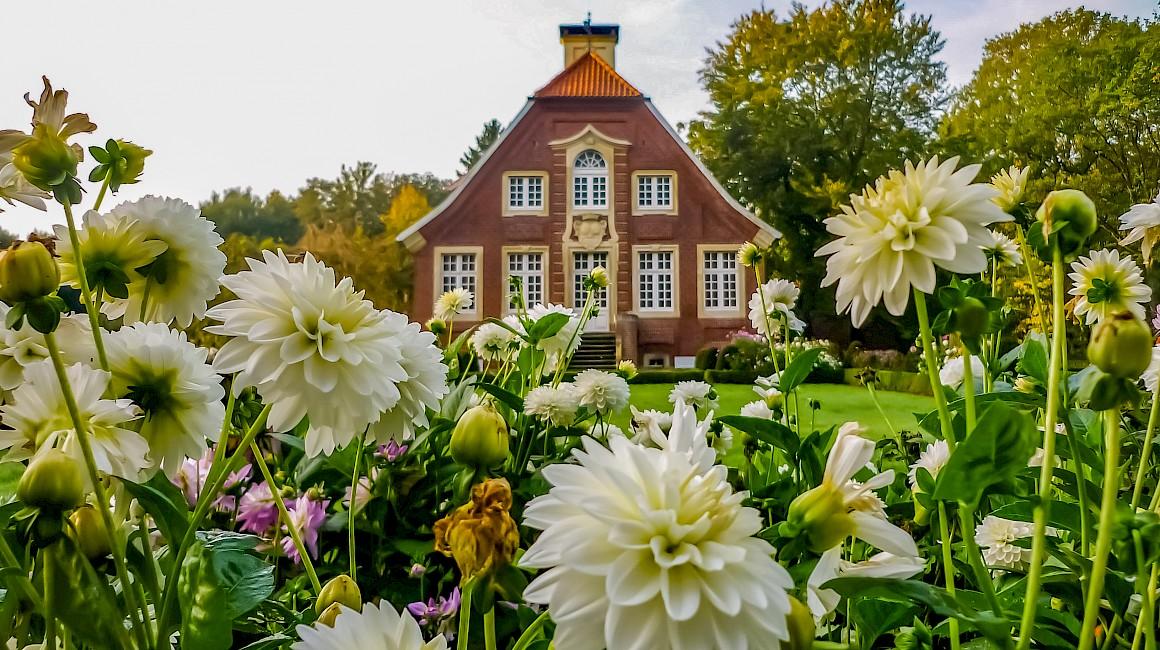 Herbstblumen schmücken den Park