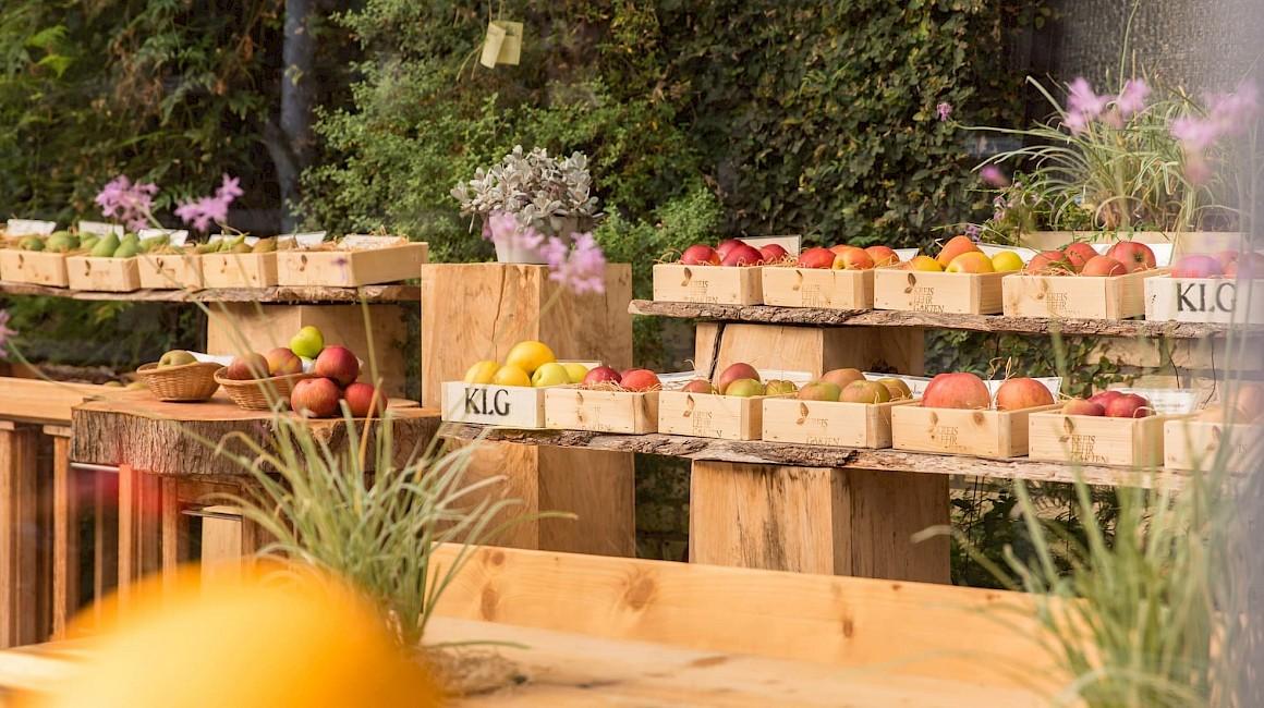 Apfelschau im Kreislehrgarten