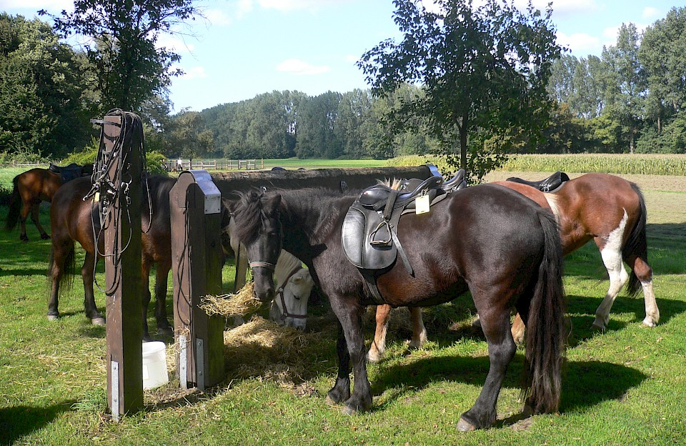 Reiten rund um die Pferdehauptstadt Warendorf
