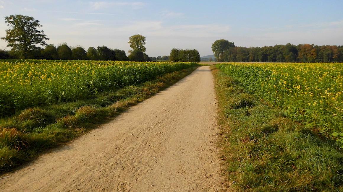 Stille Reitwege bieten beste Voraussetzungen für einen Wanderritt