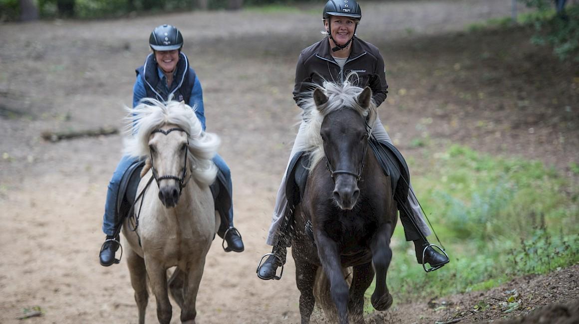 Glückliche Pferde und Reiter auf den Emsauen Schleifen