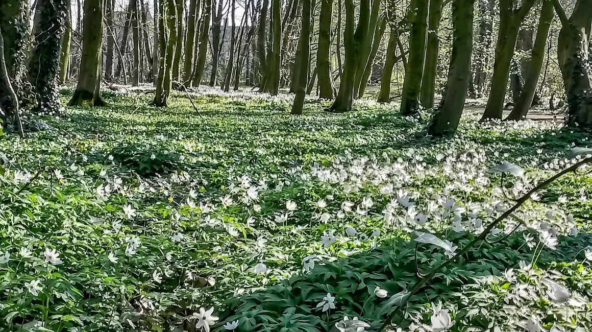 Der Frühling erweckt den historischen Tiergarten von Raesfeld