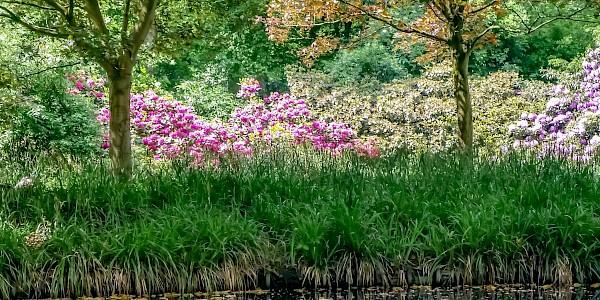 Der kleine Park am Aasee in Bocholt