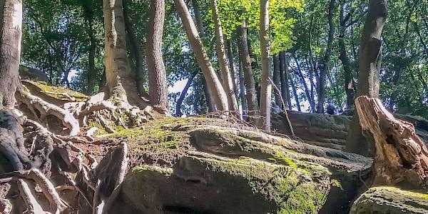 Der Hexenpfad bei Tecklenburg führt zur Hexenküche