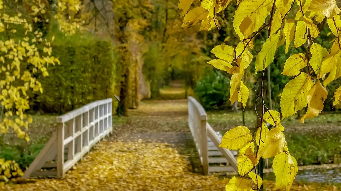 Strahlen präsentiert sich der Schlossgarten Hovestadt im Herbstlicht