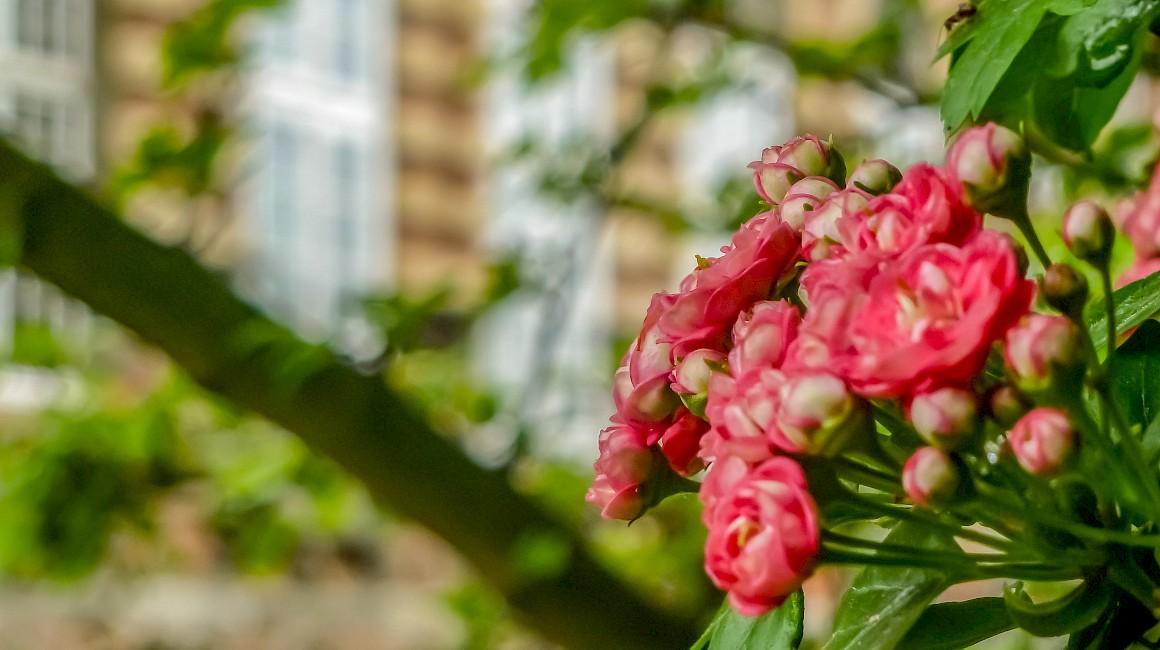 Kleine Farbakzente überraschen im Schlossgarten Hovestadt