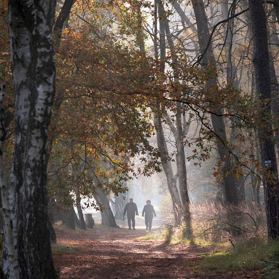 Winterspaziergänge im Münsterland