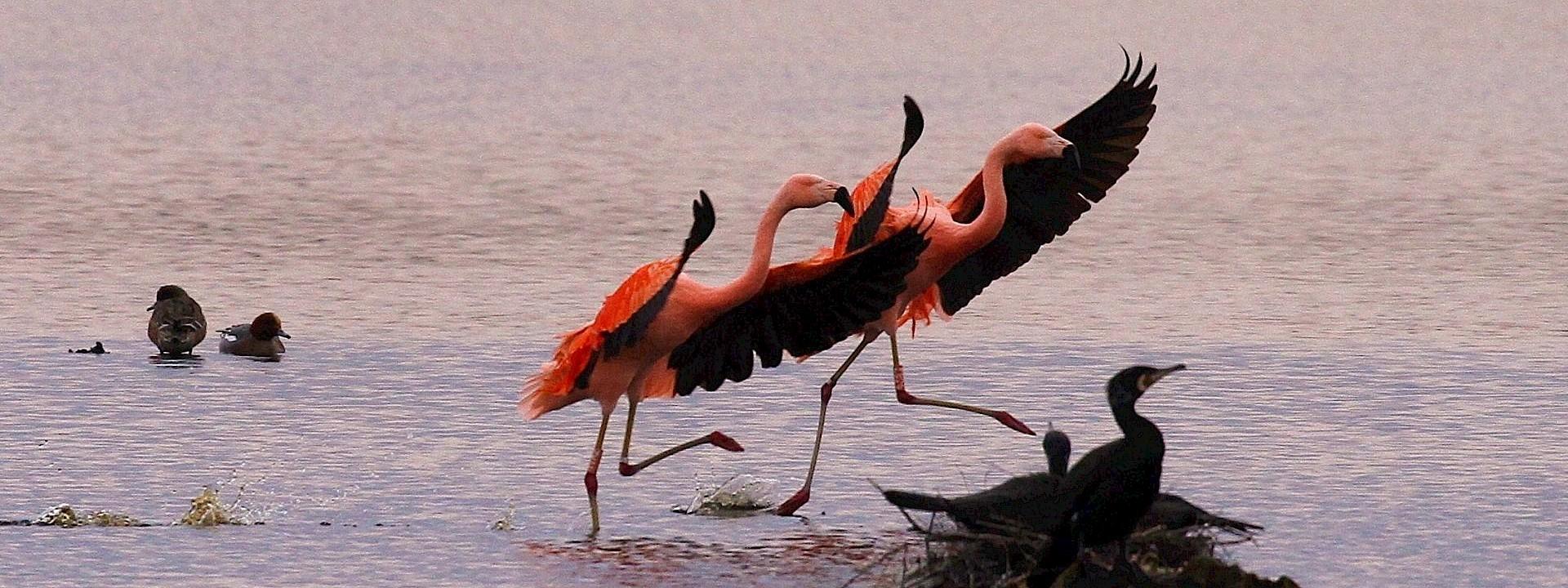 Radreise Flamingoroute Legdener Dahlien mit Flamingos vis-a-vis 4 Tage | ab 182 Euro