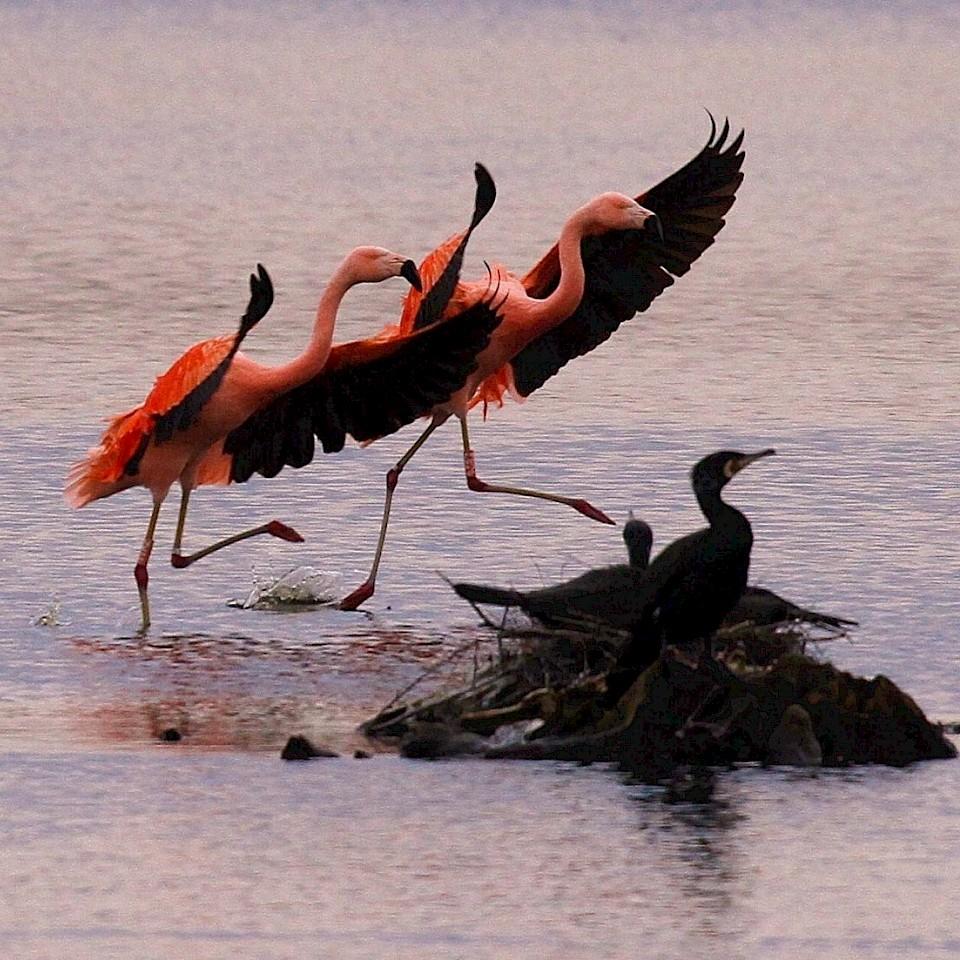 Radreise Flamingoroute Legden