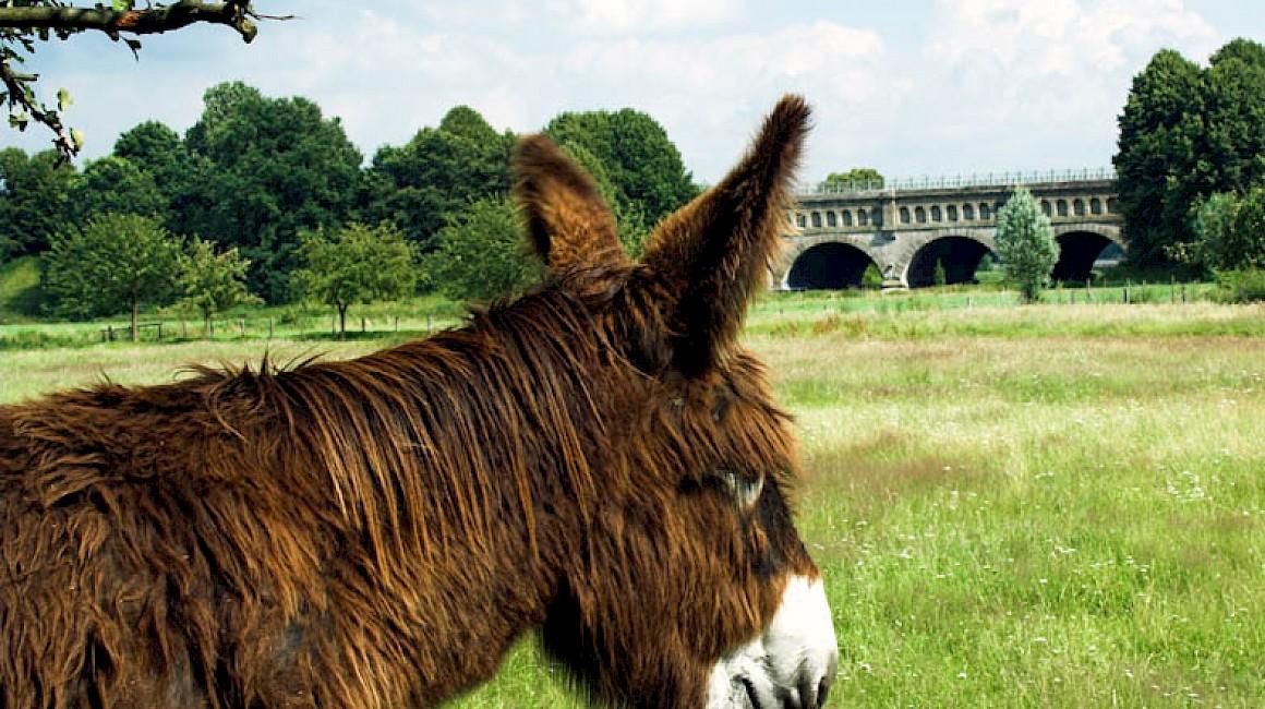 Natürlicher Naturschutz - Esel in den Steverauen