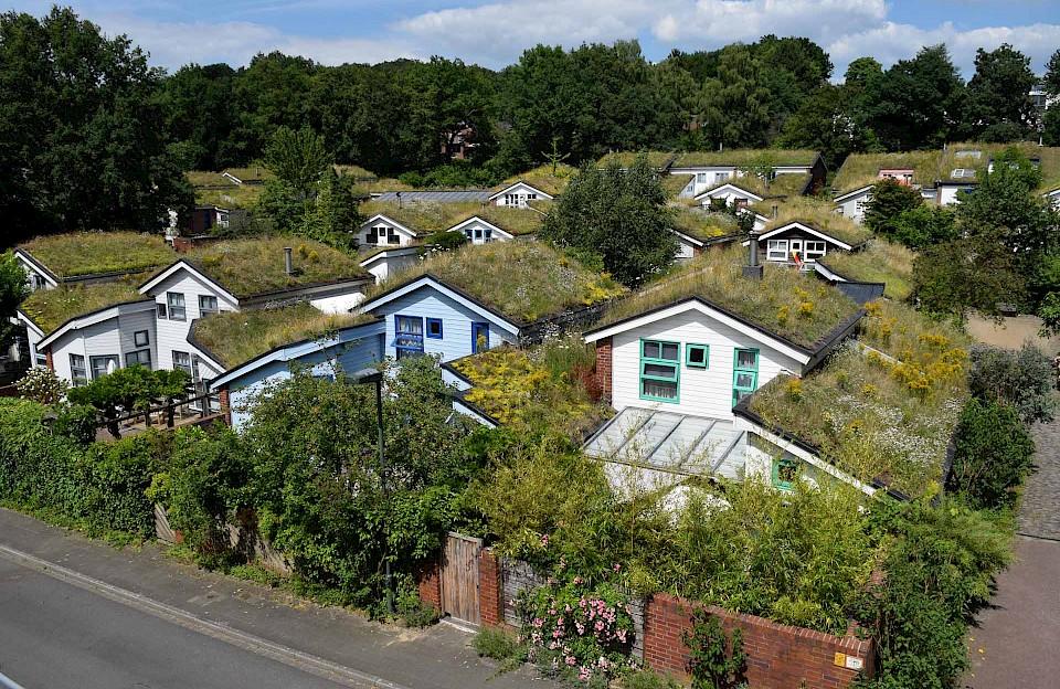 Ökosiedlung mit Dachbegrünung