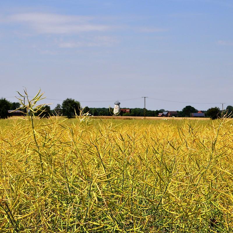 Die sanfte Landschaft rund um Everswinkel<br>© Münsterland