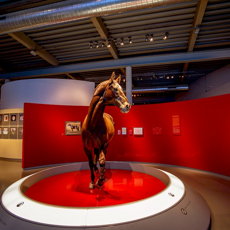 Blick in das Westfälische Pferdemuseum im Allwetterzoo Münster<br>© Daniel Morsey