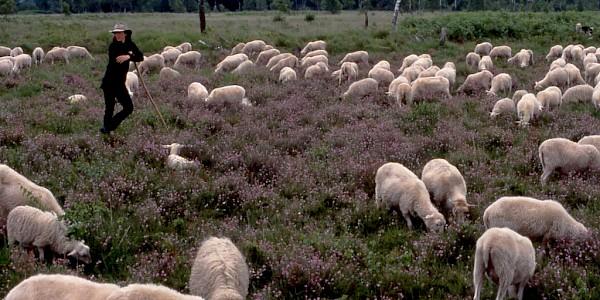 Hündfelder Moor